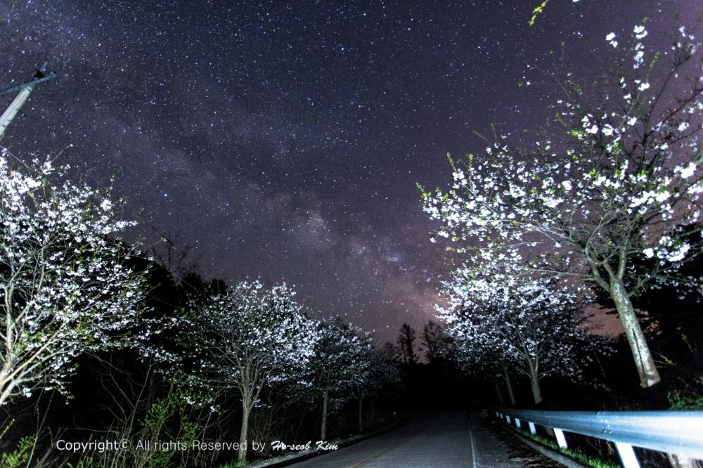 r_벚꽃과은하수_02_txt.jpg